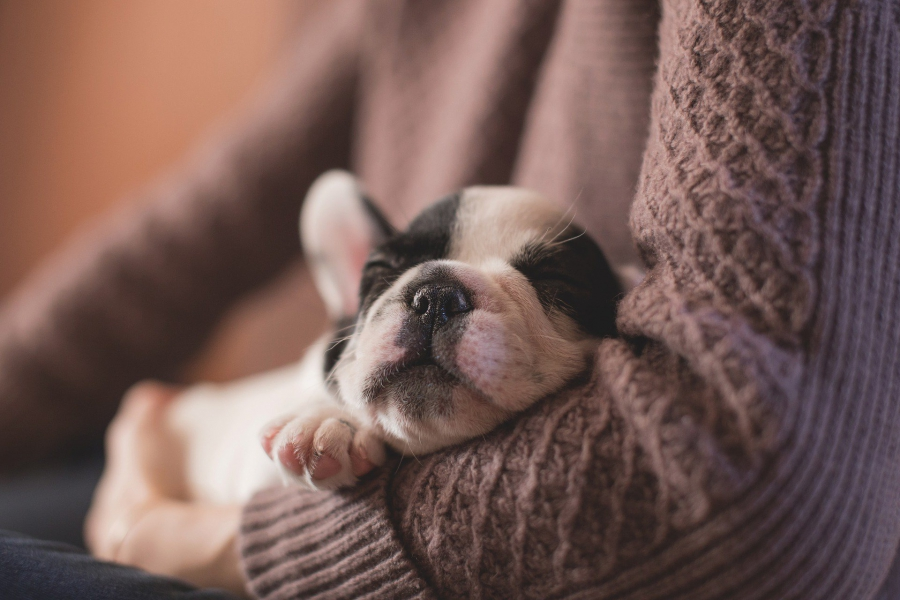 Qual a frequência ideal para levar o pet ao veterinário?
